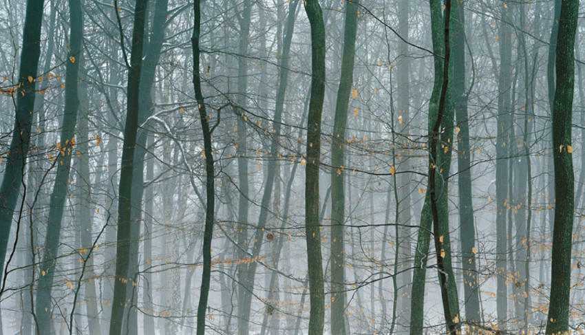 A forest, a picture by Axel Hutte